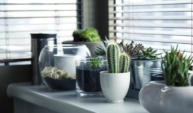 parapet s kaktusy