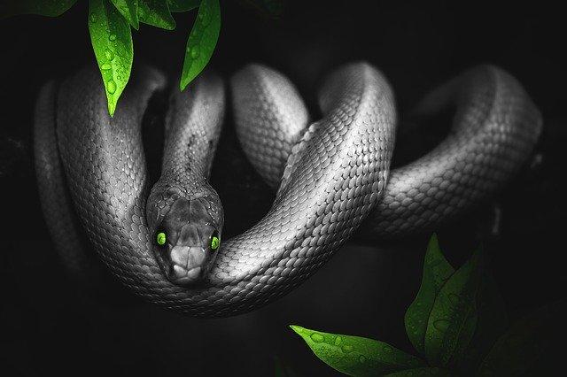 Sivý had so zelenými očami